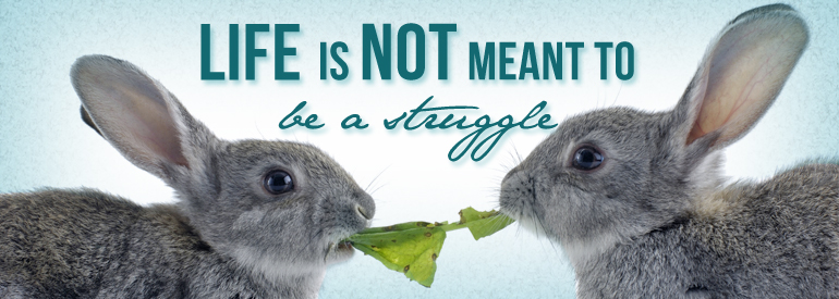 Image of Two Rabbits Struggling Over Lettuce Leaf